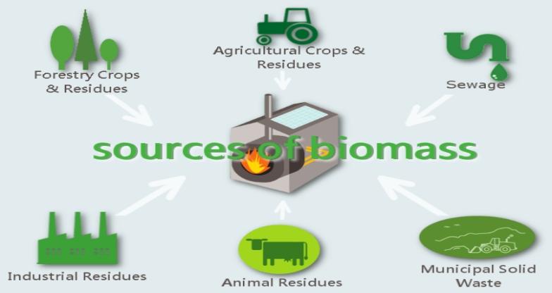 Source of Biomass