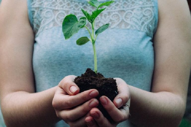 Save Earth by planting trees