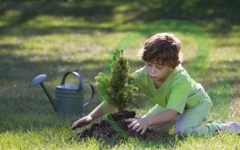 Plant more trees and protect green spaces