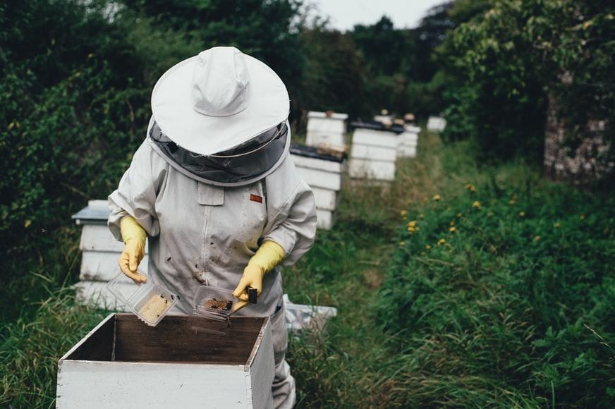Hobby Farm - Beekeeping